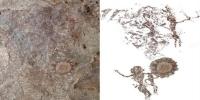 istocni timor otkriveni drevni crtezi multikulturalnog drustva
