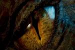 Zmajevi, gmazovi, reptili - Mitologija ili stvarnost?
