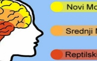 Kako zaobići reptilski mozak i povratiti stvaralačku energiju?